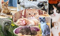 Сплошное очарование! Выбираем кота года