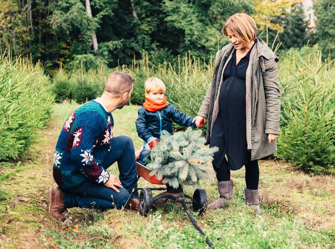 Куда деть елку после нового года: инструкция