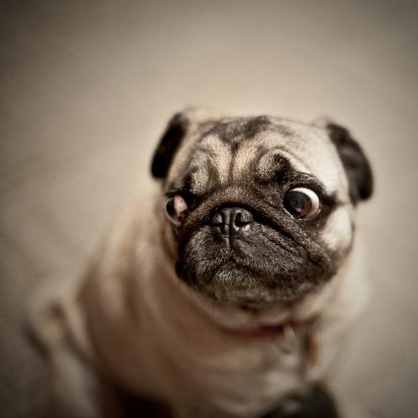 Какая собака подходит вам по гороскопу - Woman s Day