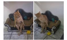 Кот умиляет хозяев тем, что завел привычку сидеть на диванчике как человек (видео)