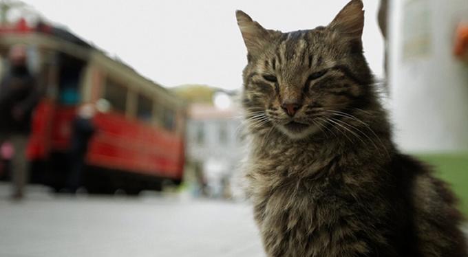 При поддержке Psychologies в российский прокат выходит фильм «Город кошек»