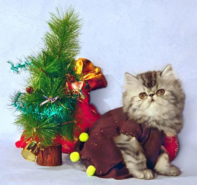 Новогодние костюмы для кошек, фото