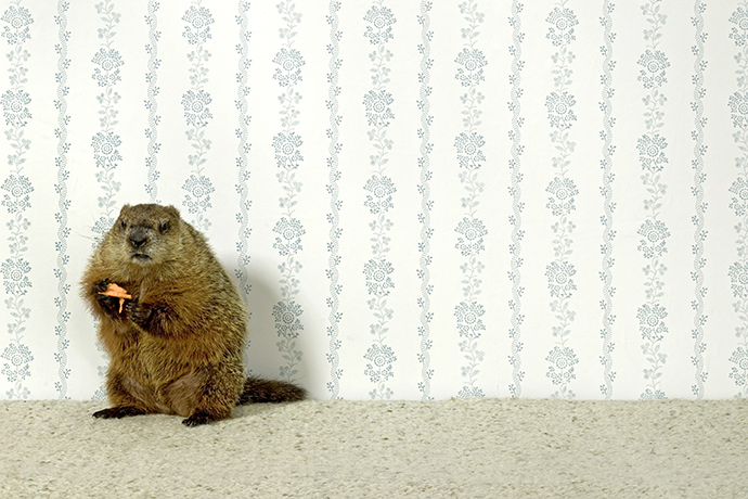 And my groundhog with me: how to deal with the routine
