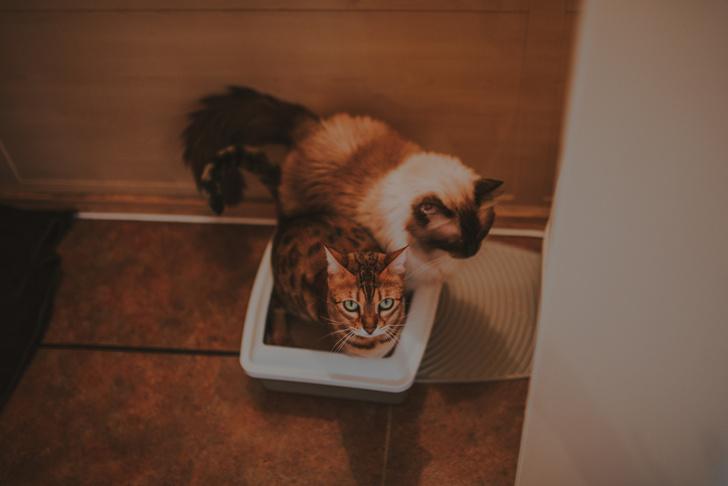 Фото №5 - 12 вещей, которые раздражают твоего кота