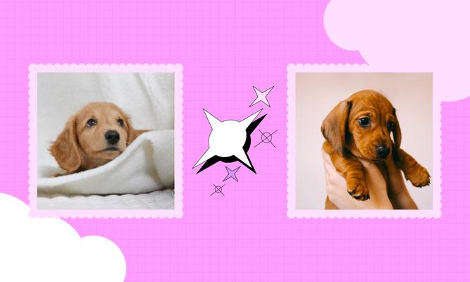Фото №1 - Тест: Выбери самого милого щеночка и узнай, какой сериальный краш тебе подходит 🔥