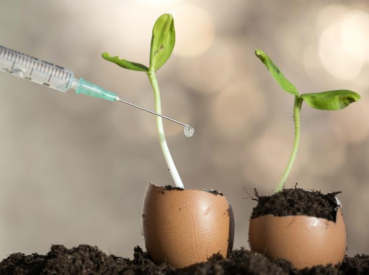 Фото №9 - Что нужно знать о настоящих органических продуктах (и о том, как их вычислить)
