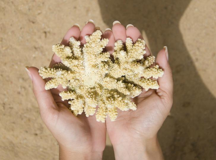 Фото №6 - Что такое коралловая вода, и можно ли похудеть с ее помощью