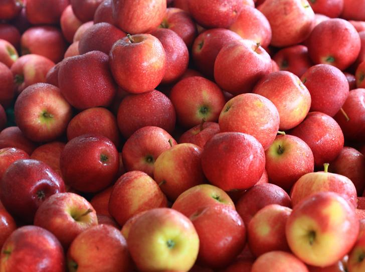 Фото №5 - 10 причин, почему вам необходимо есть яблоки