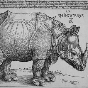 Фото №1 - В Якутии украли останки доисторического носорога