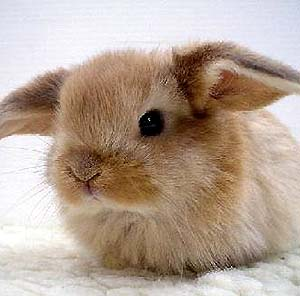 Фото №1 - В Китае клонировали кролика
