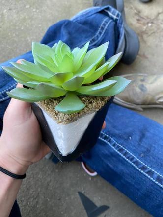 Фото №3 - Девушка два года поливала растение, прежде чем обнаружила, что оно пластиковое