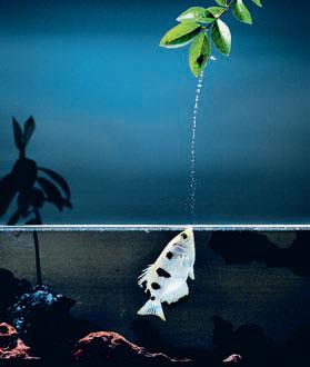 Фото №1 - Живой песок, читающая рыба и другие новые открытия