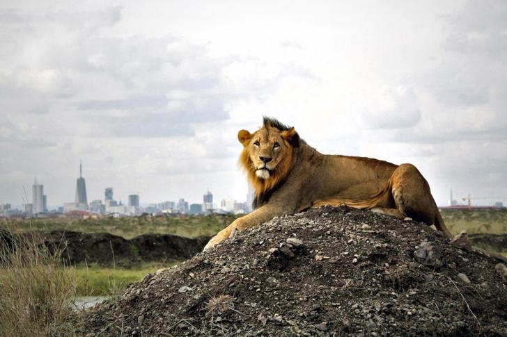 Фото №1 - Царь города