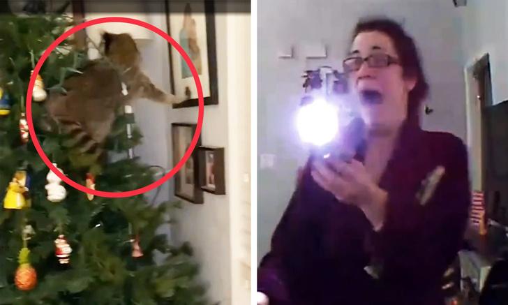 Фото №1 - Американка обнаружила енота на рождественской елке в своем доме (эмоциональное видео)