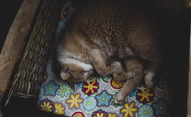 Фото №2 - Что значит поза, в которой спит твоя кошка (7 поз)