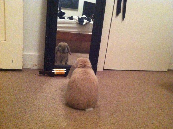 Фото №1 - 30 животных (но не котов), которые открыли для себя зеркало