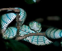 Фото №12 - Борнео, колыбель эволюции