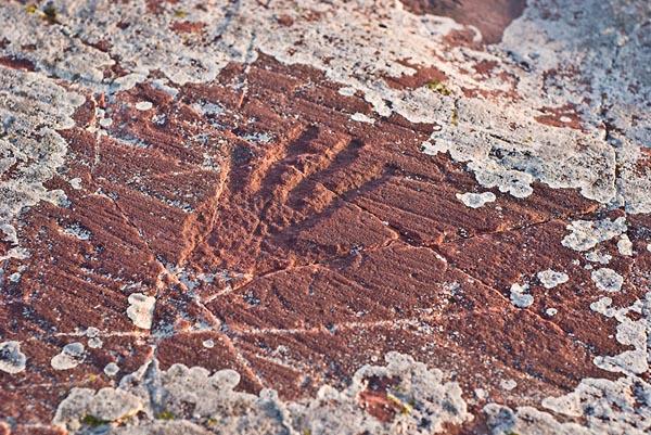 Фото №3 - Волшебные следы на мягких камнях
