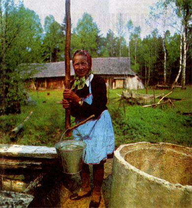 Фото №3 - Гринис осоково-вересковый