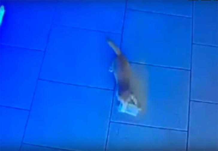 Фото №1 - В Анапе котенок украл из кассы бара пачку денег. Дважды (видео)