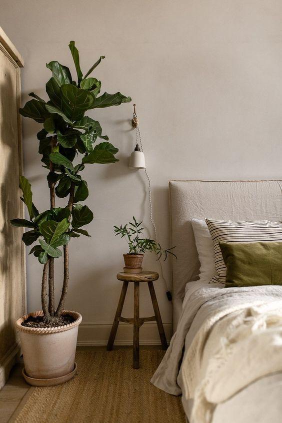 Фото №6 - Лучшие растения для спальни: советы по выбору и уходу