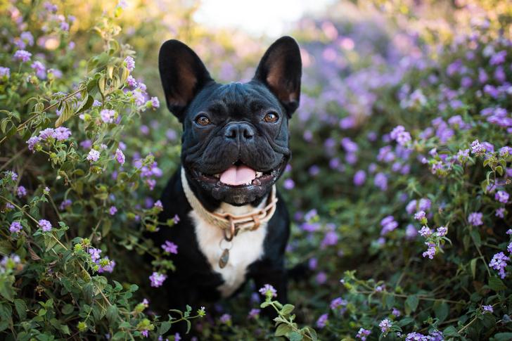Фото №2 - Топ-15 самых популярных в России пород собак