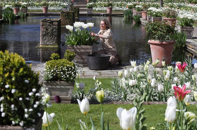 Фото №3 - Сад памяти Дианы: самая вдохновляющая причина попасть в Лондон