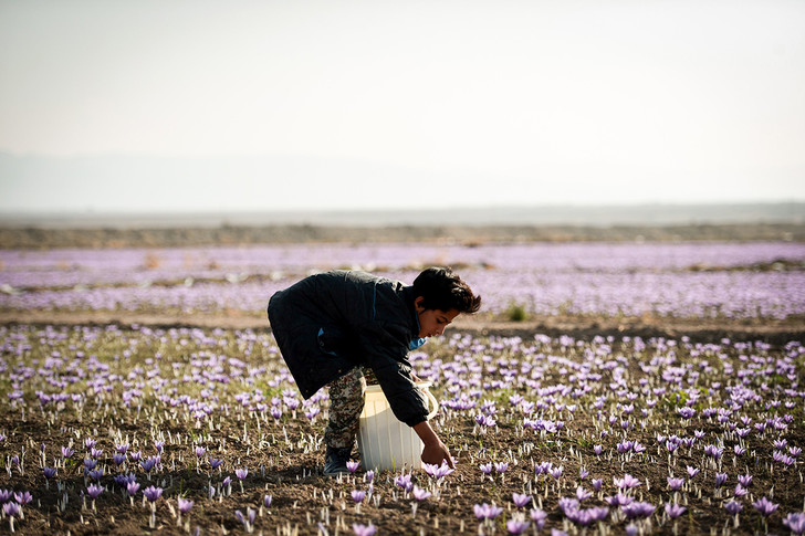 Фото №1 - Ноябрьская весна