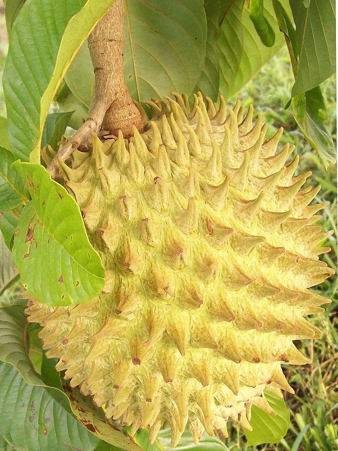 Фото №10 - Фруктовая экзотика: 10 плодов с удивительным вкусом