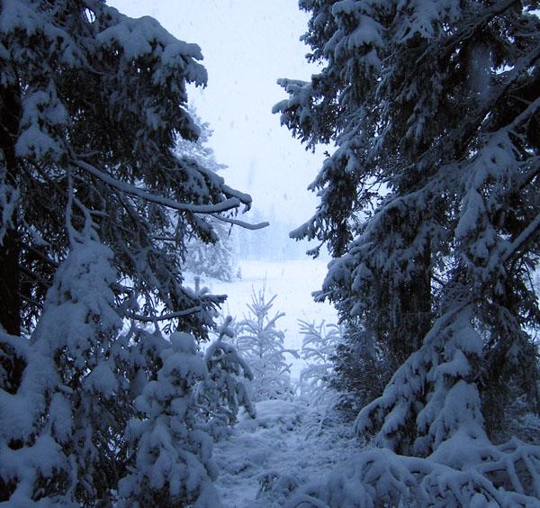 Фото №1 - Только что из лесу или с метели...