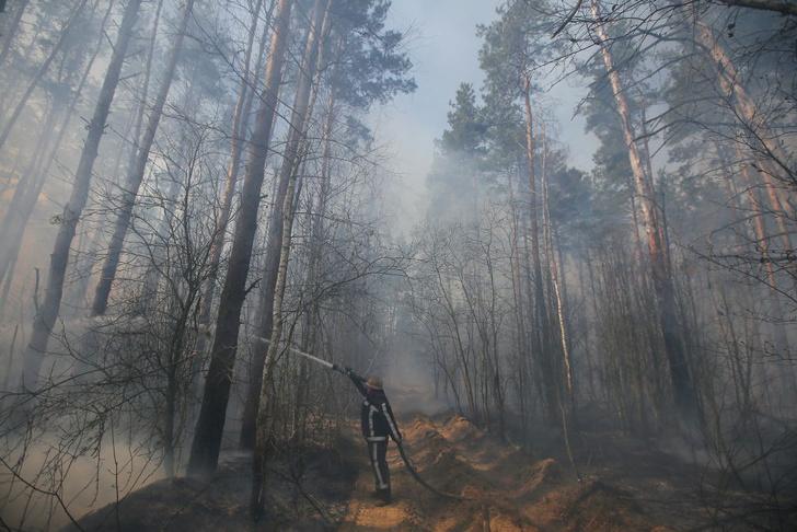 Фото №1 - Дождь помог потушить пожар в зоне отчуждения Чернобыльской АЭС