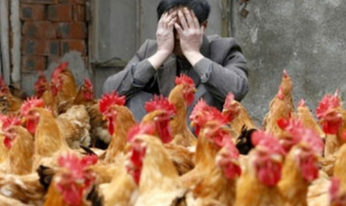 Фото №1 - Роспотребнадзор рассказал, как уберечься от птичьего гриппа во время поездки в Китай