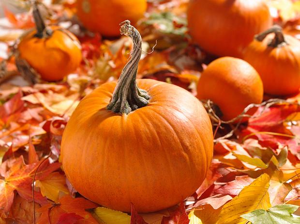 Фото №1 - Королева Хэллоуина: 7 интересных фактов и 3 полезных рецепта из тыквы