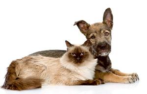 Фото №1 - Почему пород кошек меньше, чем пород собак?