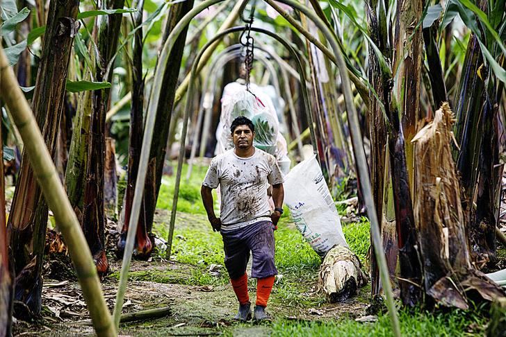 Фото №5 - Рабочий момент: банановый рай