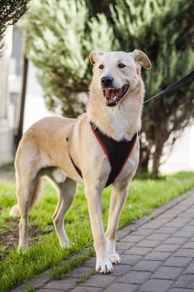 Фото №2 - Котопёс недели: возьми из приюта пса Буми или кошку Аришу