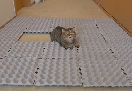 Как отреагируют коты, если выложить пол картонными лотками из-под яиц (видео)