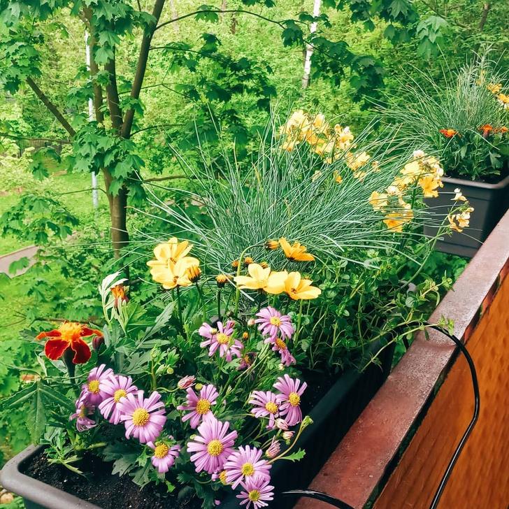 Фото №3 - Зеленый оазис на балконе: 5 растений, которые помогут перенести жару