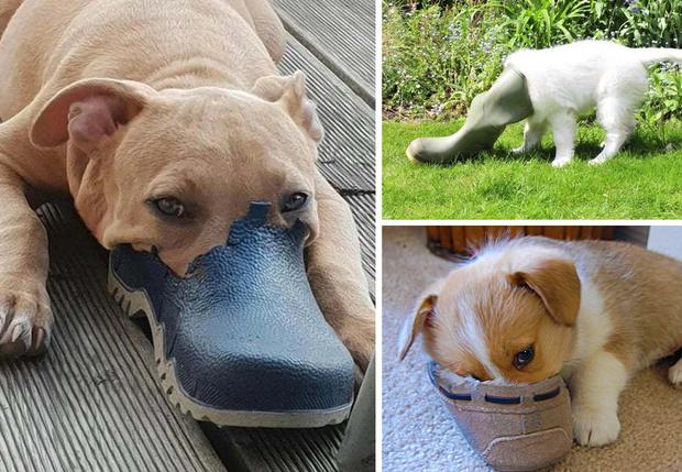 Фото №1 - 13 фото собак, притворяющихся утконосами