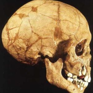 Фото №1 - Неандертальцы жили даже в Сибири