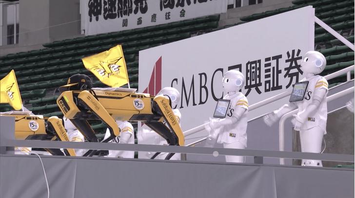 Фото №1 - Роботпсы Spot станцевали с японскими роботами-«перцами» (видео)