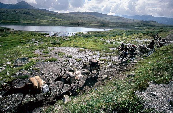 Фото №2 - Духи тайги: как живут оленеводы Тувы