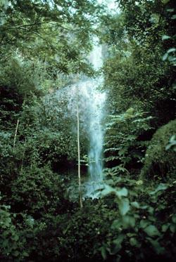 Фото №3 - Край леса