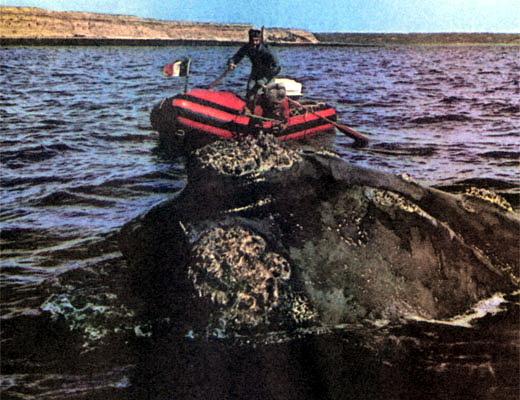 Фото №1 - Игры морских гигантов