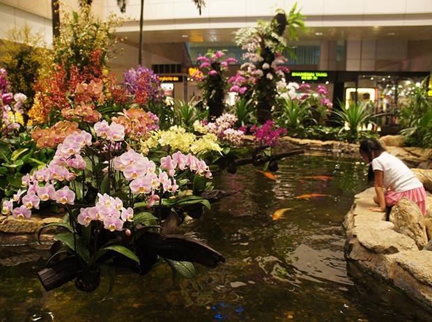 Фото №4 - Не выходя из аэропорта: 5 ботанических садов в Чанги (Сингапур)