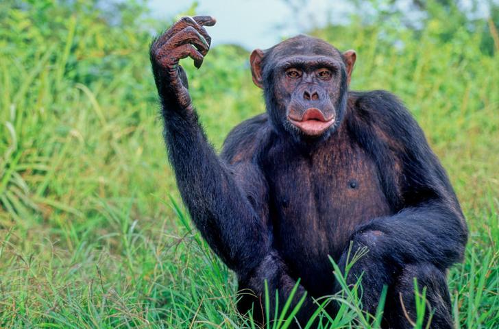 Фото №2 - «В поте лица твоего»: отрывок из книги Александра Соколова «Странная обезьяна»