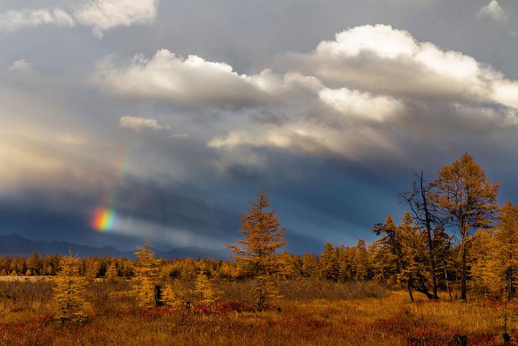 Фото №5 - Фотогалерея: лесные истории