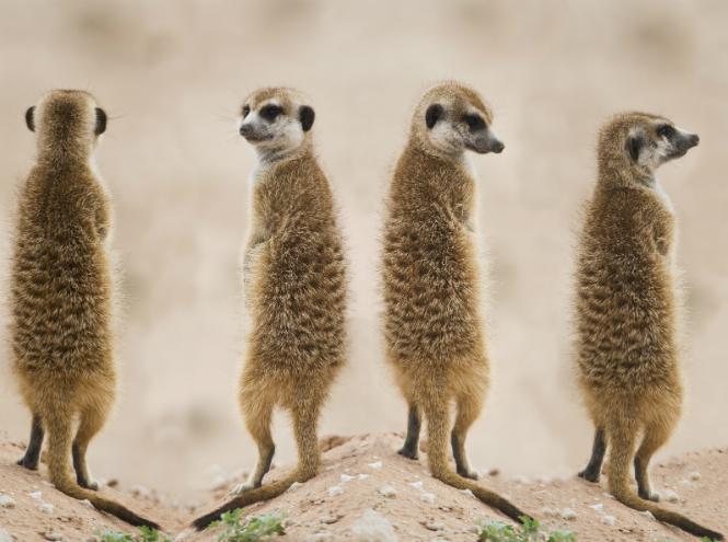 Фото №21 - Самые ми-ми-милые дикие животные