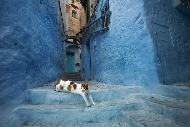 Фото №1 - Синий город