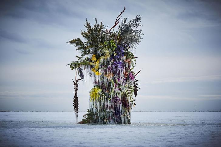 Фото №7 - Инсталляция из замороженных цветов на Хоккайдо
